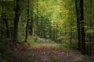 Blätterwald...