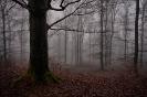 Mystischer Herbstwald...